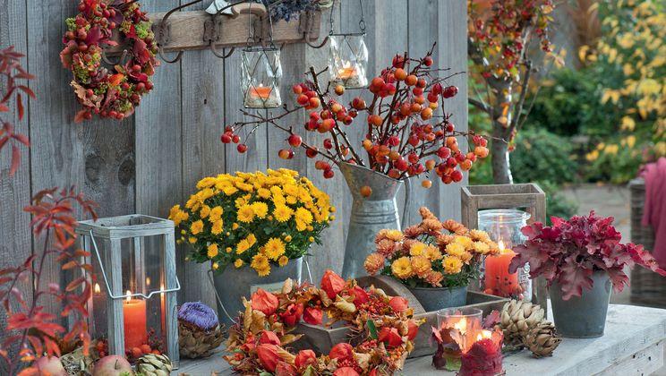 Herbstliche Deko Fur Den Garten Pflanzen Tisch In 2020 Herbstblumen Herbstdeko Fur Draussen Outdoor Dekorationen