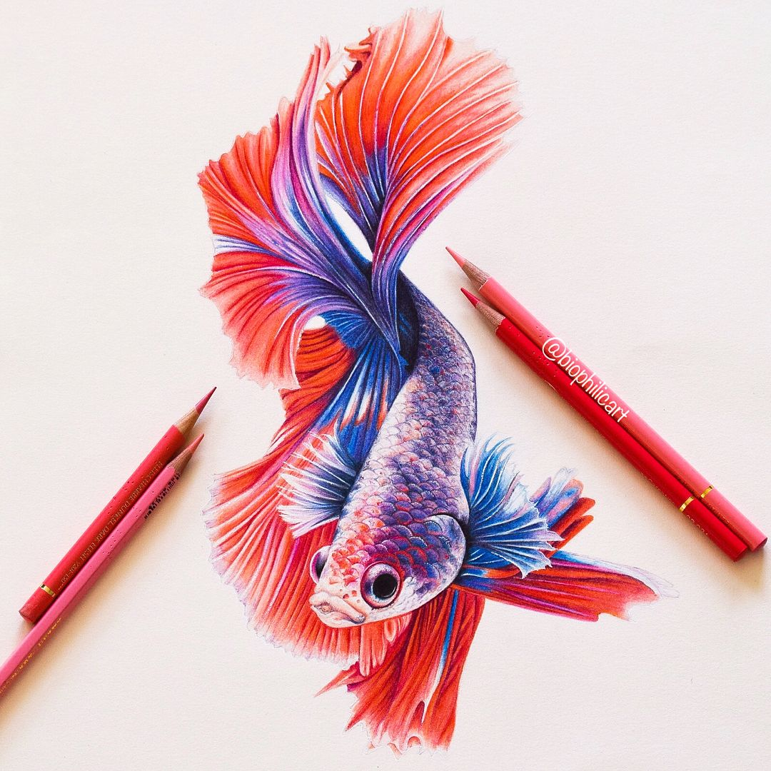 Betta Fish complete with all the missing progress shots when it looked like a ghost Fish! To give you an idea each photo represents…