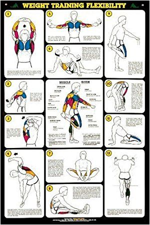 Weight training flex  laminated poster also best stretches images on pinterest physical activities rh