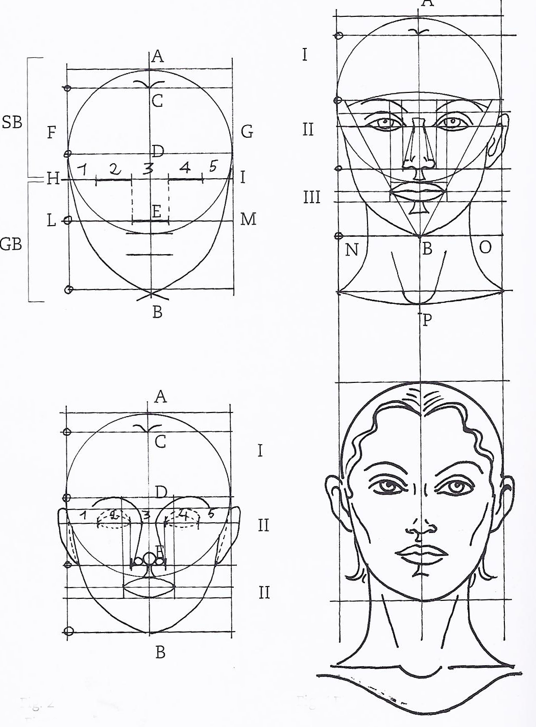 Golden rectangle in faces of the female face 3 head and face the golden ratio in human face modeling valentin schwind ccuart Image collections