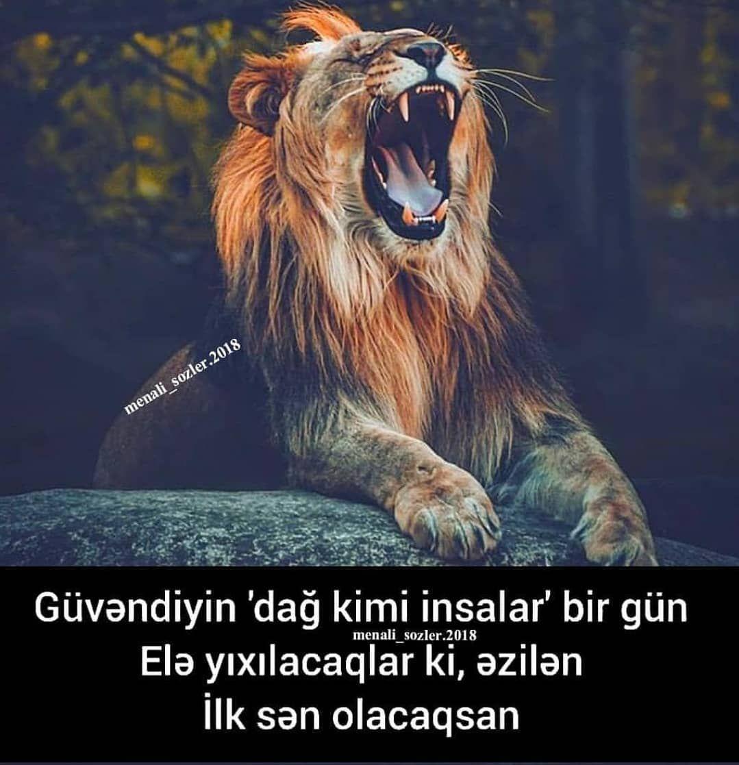 Fikirlerinizi Yorumlarda Yazin Menali Sozler 2018 Azerbaycan Azerbaijan Aztgram Baku Baki Gence Hikaye Az Crazy Girl Quote Crazy Girls Girl Quotes