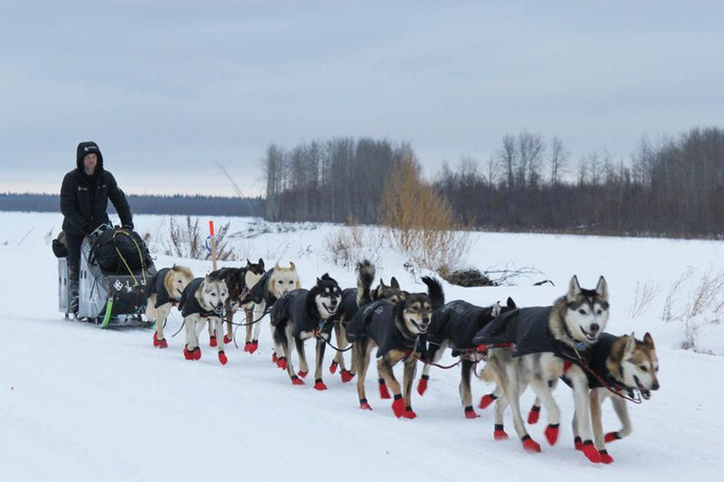 The Real Story Of Balto Hero Dog Of Alaska Dogs Working Dogs