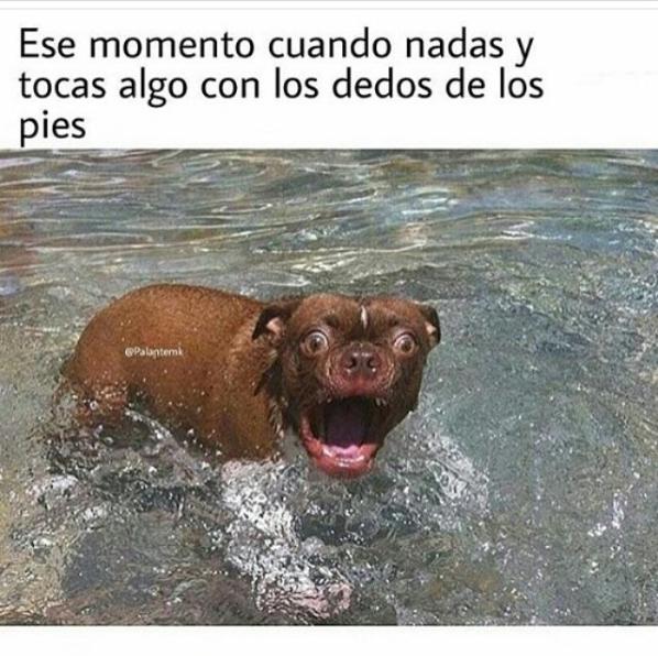 Imagenes Y Memes Chistosos 2016 Imagenes Chistosas Memes De Chihuahuas De 2018 Para Compartir Con Tus Amigos Como Memes Chistosisimos Perros Perros Chihuahua