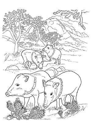 ausmalbild schweine in der wildnis zum kostenlosen ausdrucken und ausmalen für kinder.
