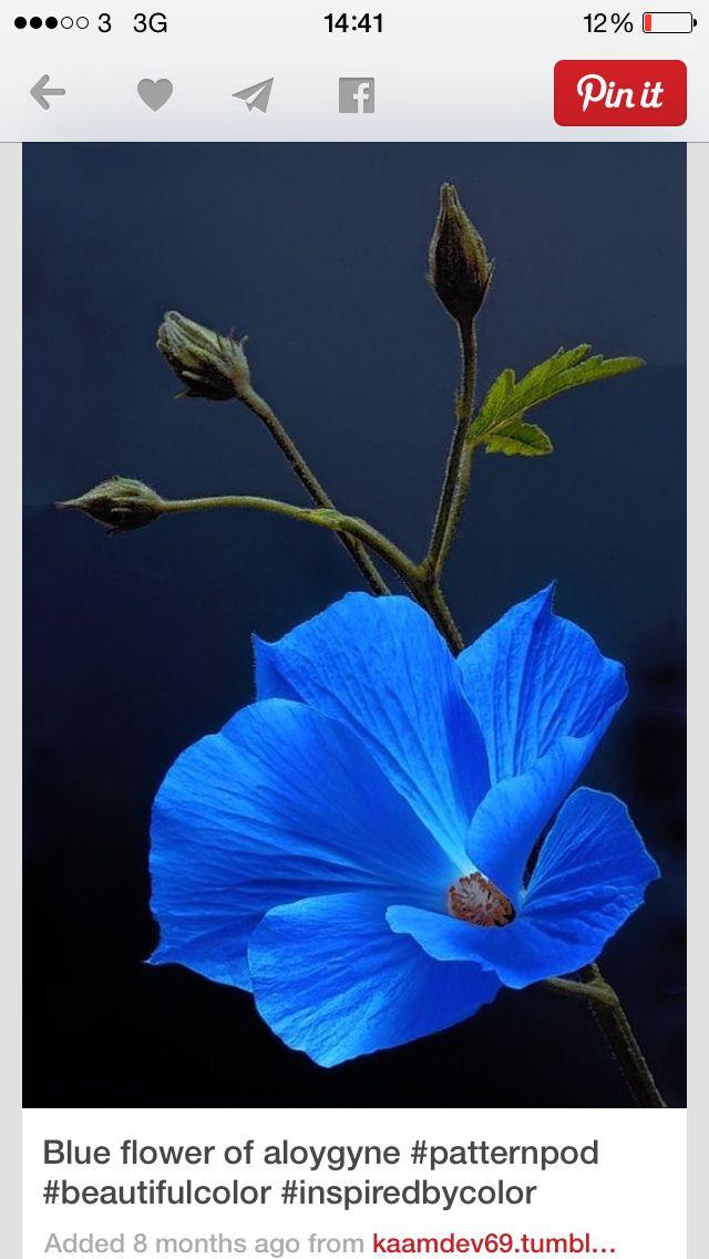 Primary colour blue