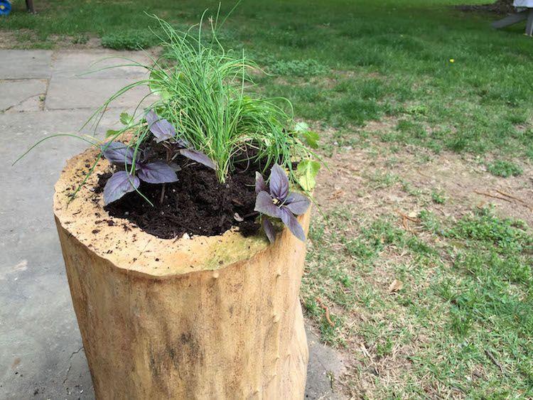 Arbre Mort Bois Flotte Et Souche D Arbre Pour Decorer Le Jardin Souche D Arbre Decoration Jardin Deco Jardin