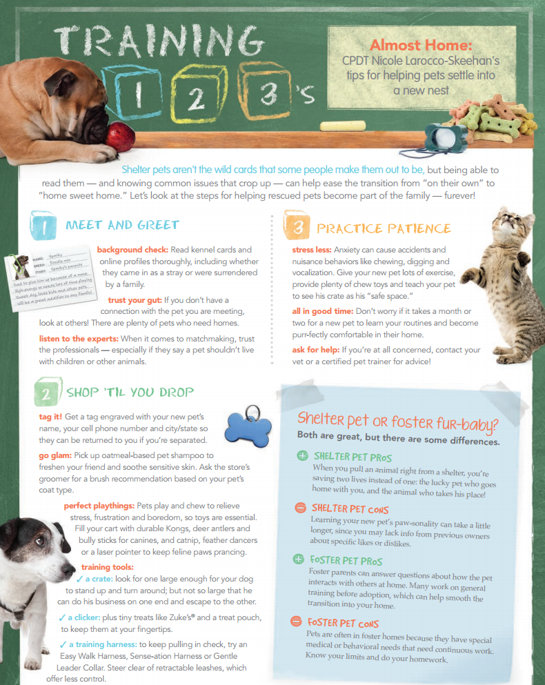 Training 123s Tips For Helping Adopted Pets Settle In At Home