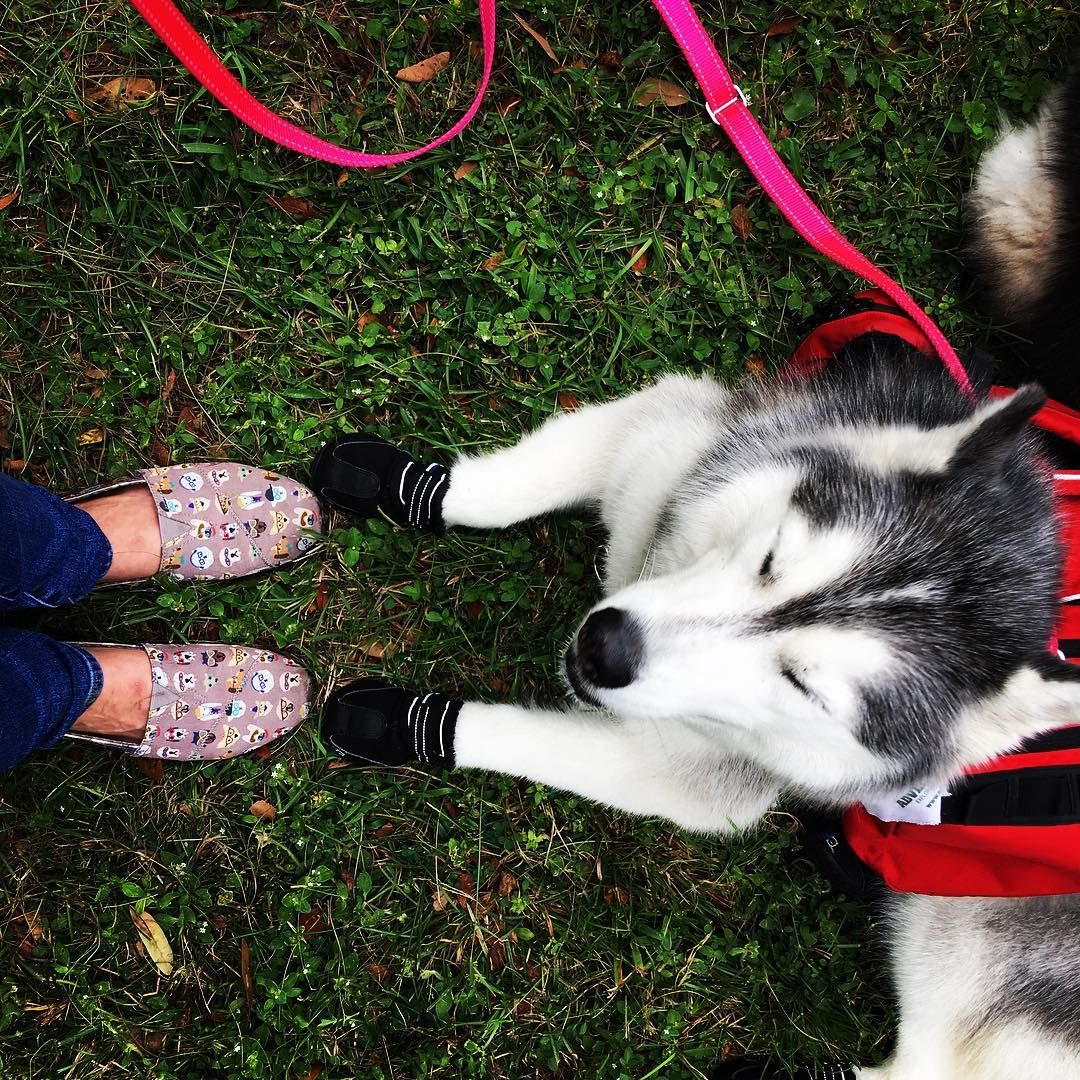 Adventure Pets Adventurepetsrv On Instagram Got Lots Of