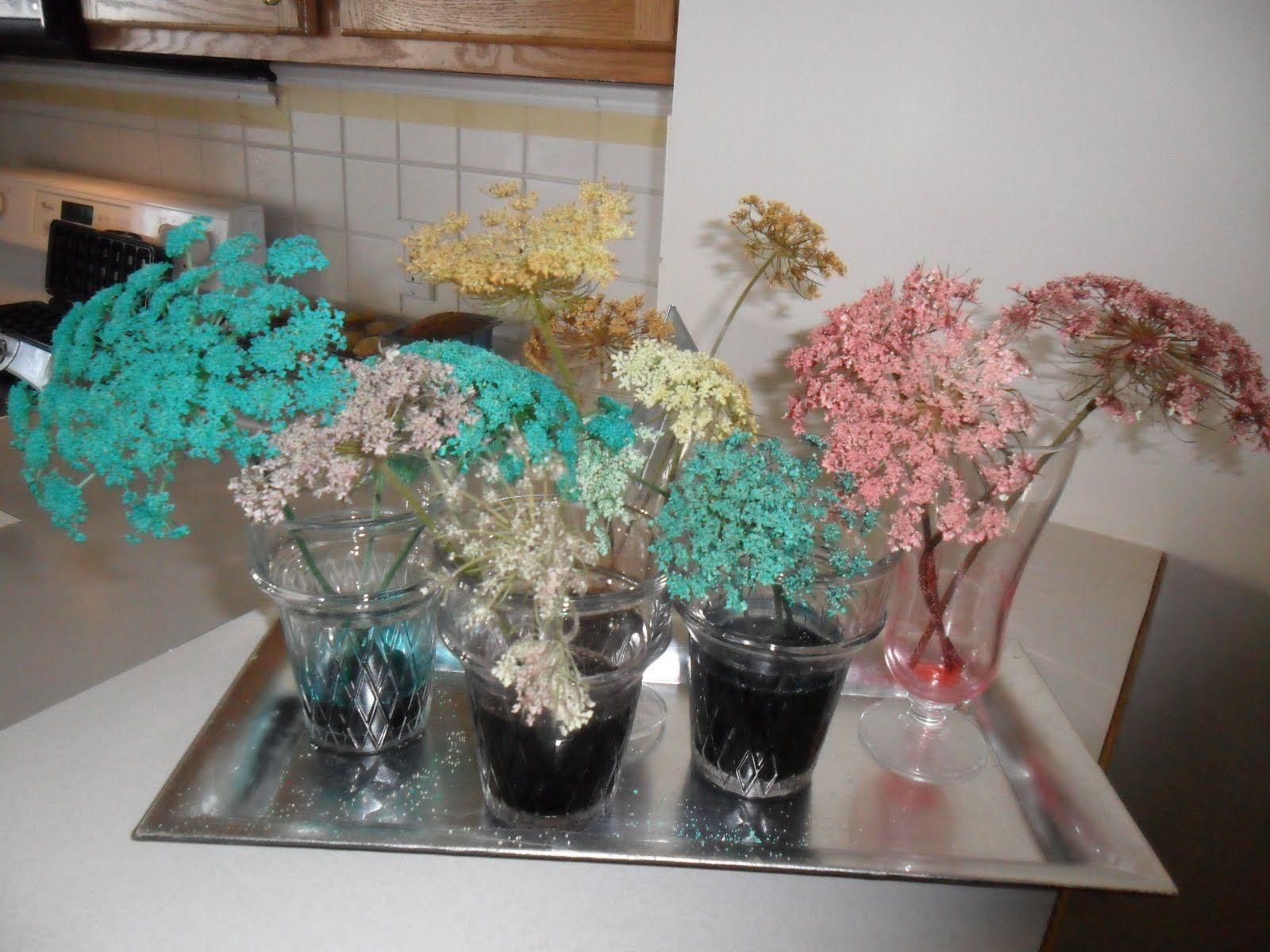 Put Queen Anne\'s lace flowers (weeds) in water with food coloring in ...