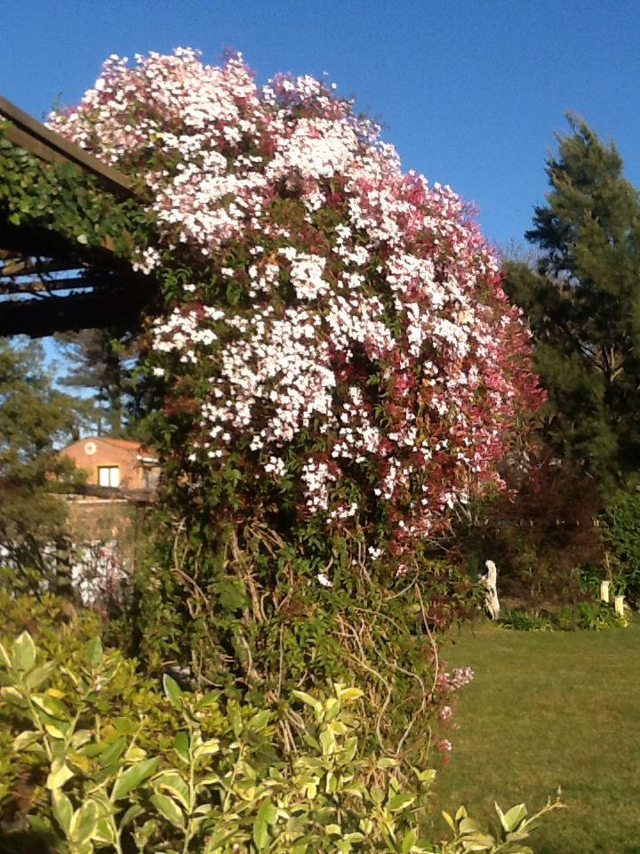 Jazm n de hungr a plantas rboles flores pinterest for Plantas y jardines