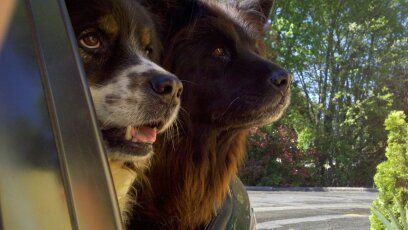 mojo and molly at the biscuitville drive-thru