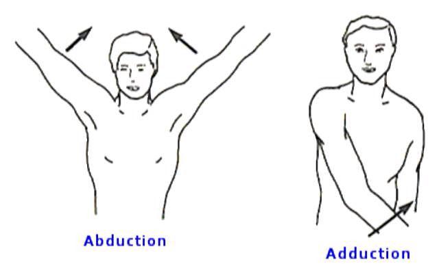 Abduccion: tipo de movimiento de una parte del cuerpo respecto a ...