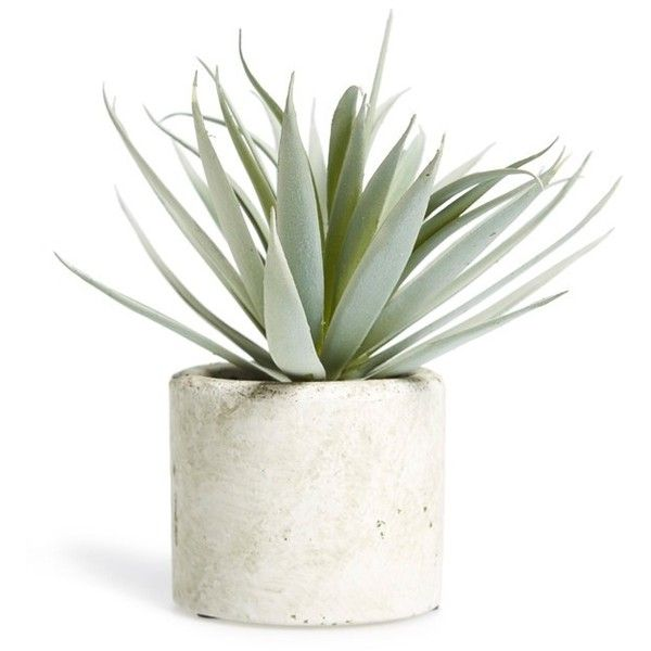 ALLSTATE Mini Artificial Succulent (¥1,420) ❤ liked on Polyvore featuring home, home decor, floral decor, plants, extra, filler, flowers, modern home accessories and modern home decor