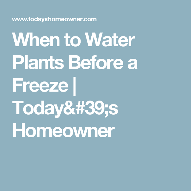 When to Water Plants Before a Freeze | Today's Homeowner