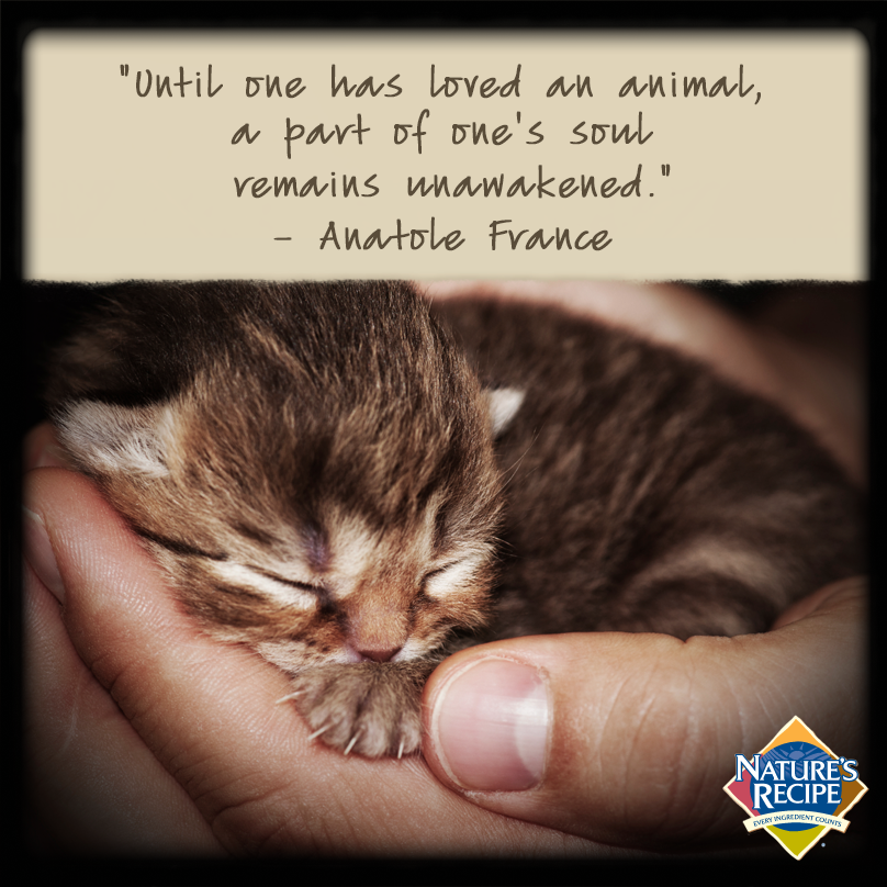 Until One Has Loved An Animal A Part Of One S Soul Remains Unawakened Anatole France Cat Kitten Quote Kitten Care Baby Animals Sleeping Kitten
