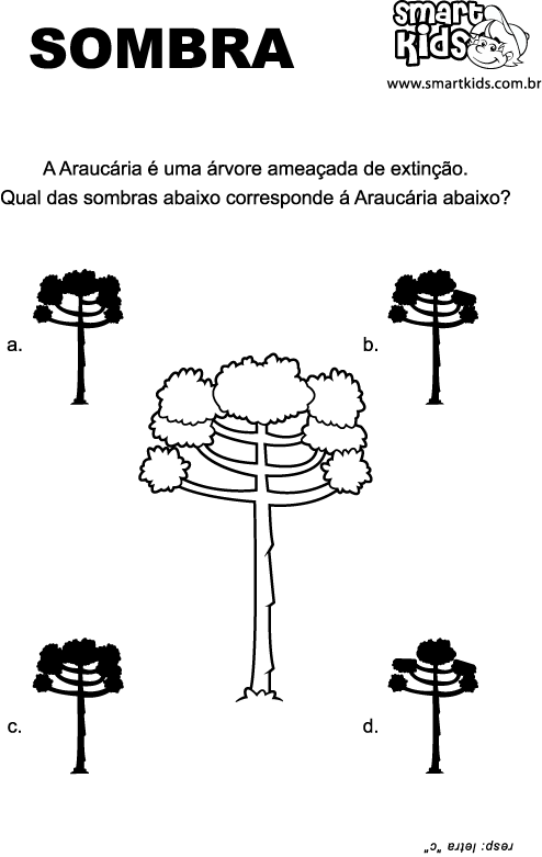 resultado de imagem para desenho de pinheiro araucaria para colorir