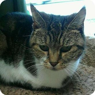 I met this cat at Salem Oregon friends with felines. We