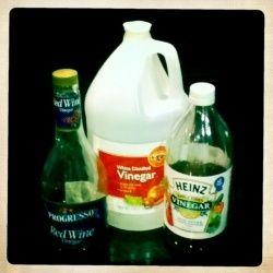 Vinegar Kills Fleas Things To Try Pinterest Fleas