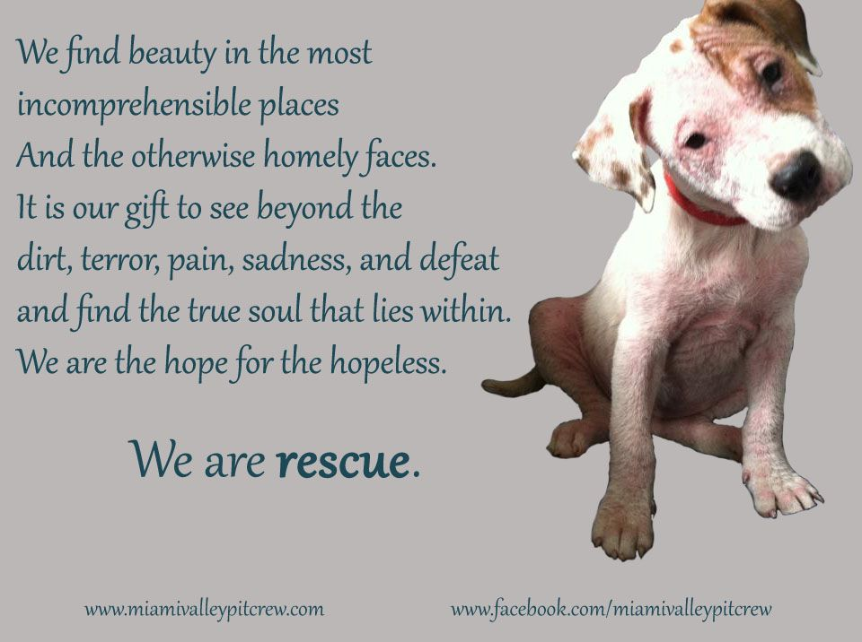WE are rescue! one of MVPC\'s top 10 favorite quotes! And ...