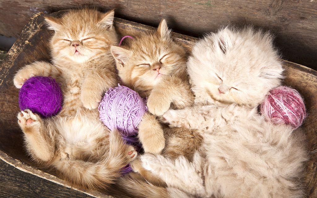 Cat Products And Articles Pet Valu Pet Store Pet Food Treats