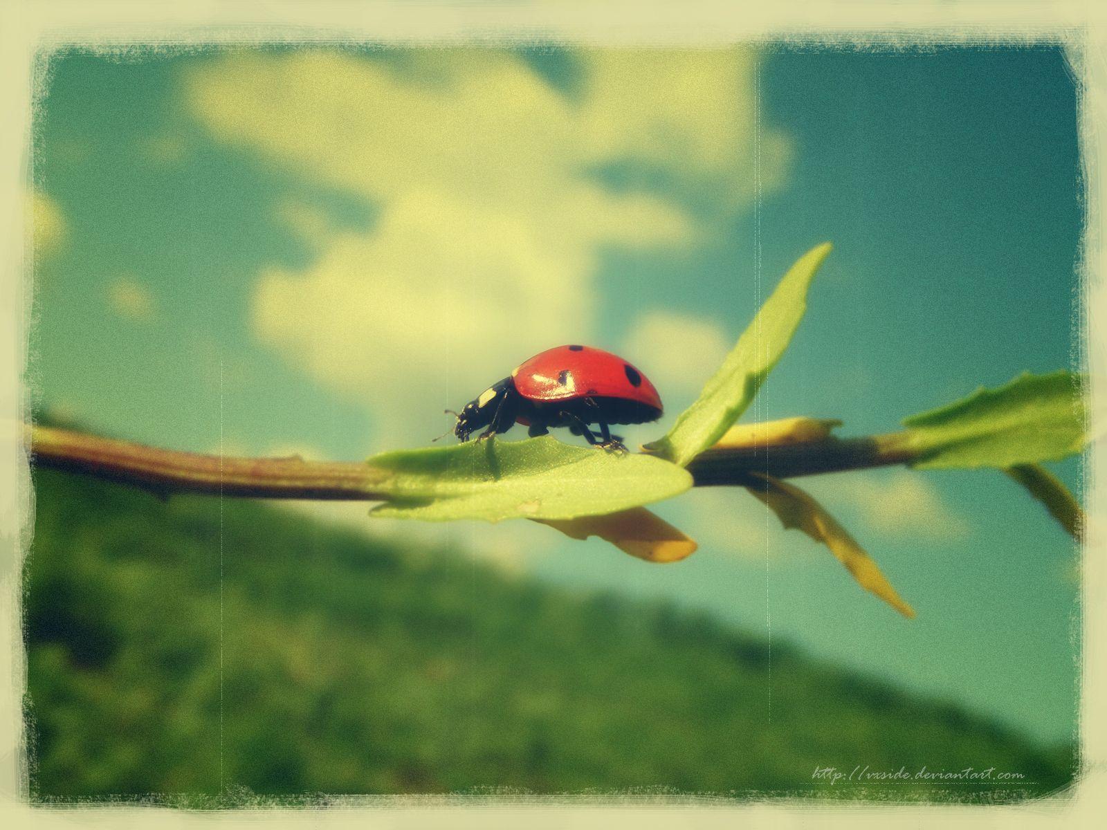 Ladybugs brave.