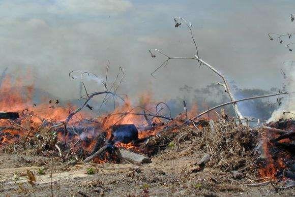 El Niño mais forte aumenta risco de queimadas no leste da Amazônia | Panorama Eco