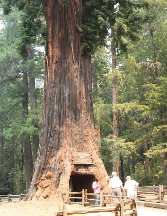 Amazing Chandelier Tree - USA | Chandeliers and Beautiful places