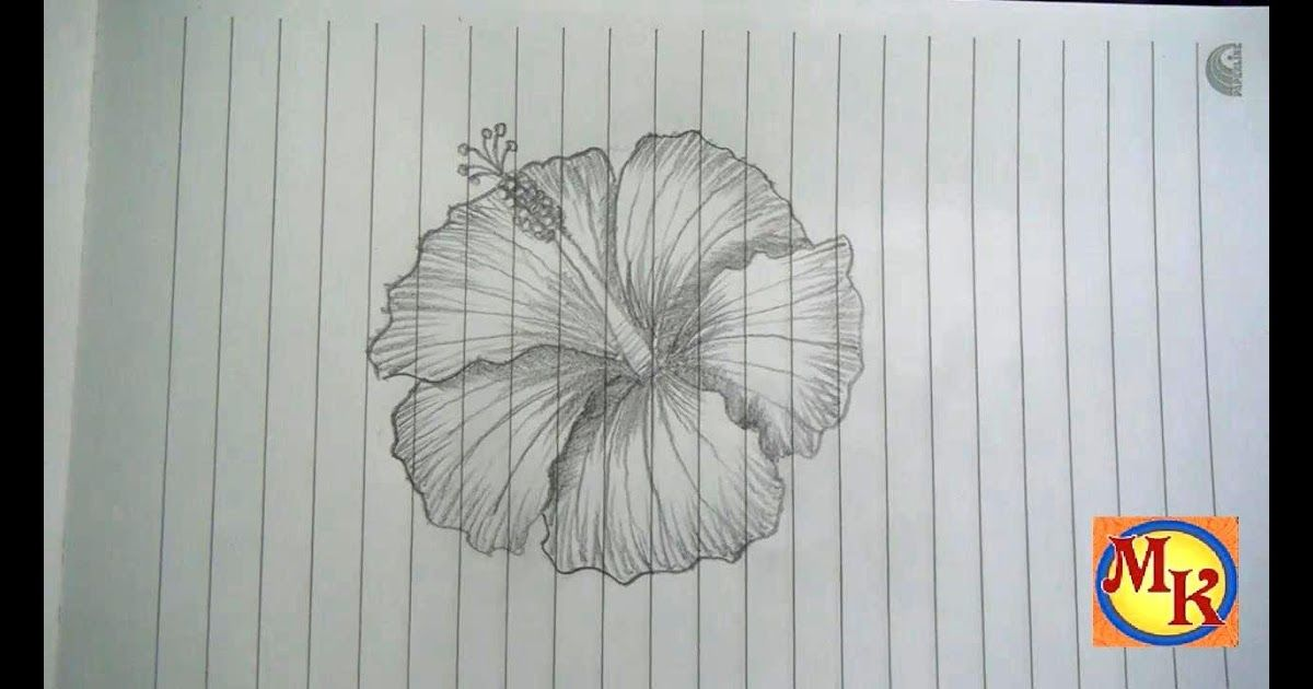 32 Lukisan Bunga Raya Cara Menggambar Bunga Kembang Sepatu Speed Drawing Youtube Download Lukisan Bunga Raya Bunga K Di 2020 Lukisan Bunga Lukisan Cara Menggambar