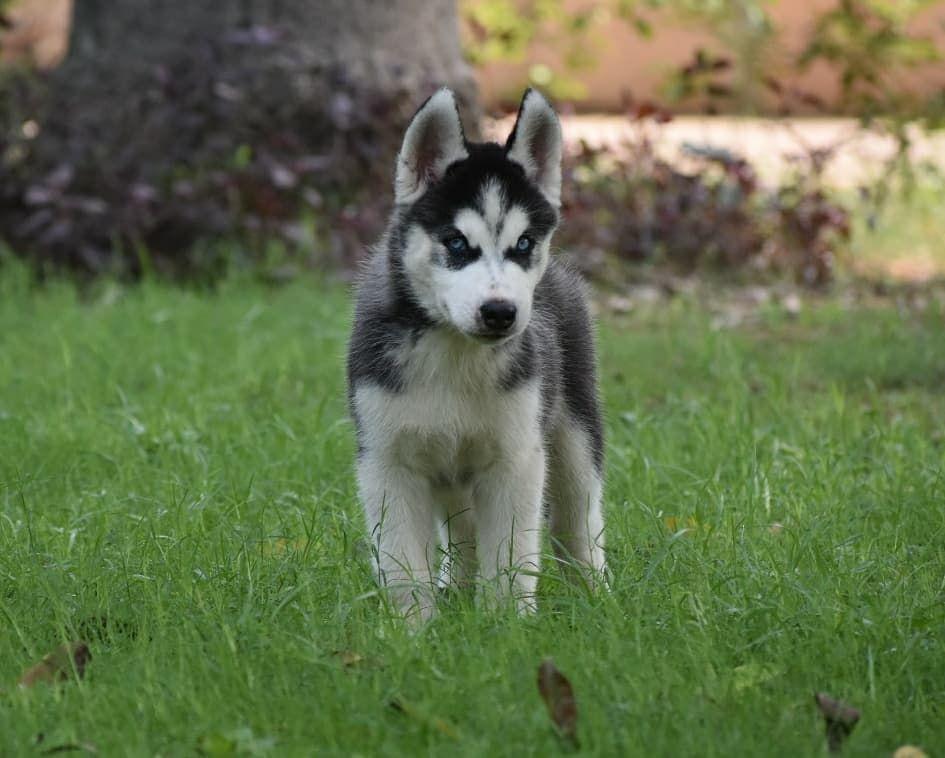 Best Pets Shops In Delhi Pets Shops In South Delhi In 2020 Beautiful Dog Breeds Pet Breeds Puppies