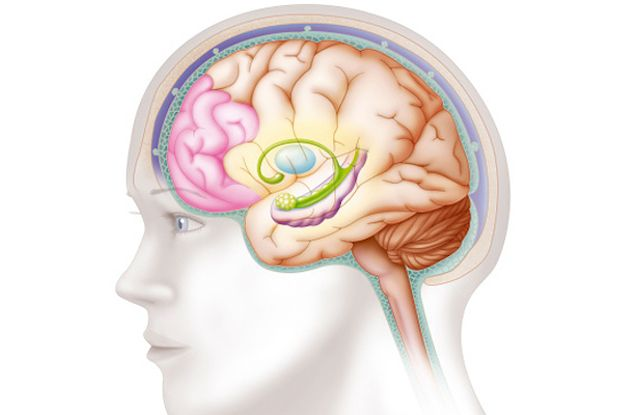 Psychology Brain Diagram Quiz - Custom Wiring Diagram •
