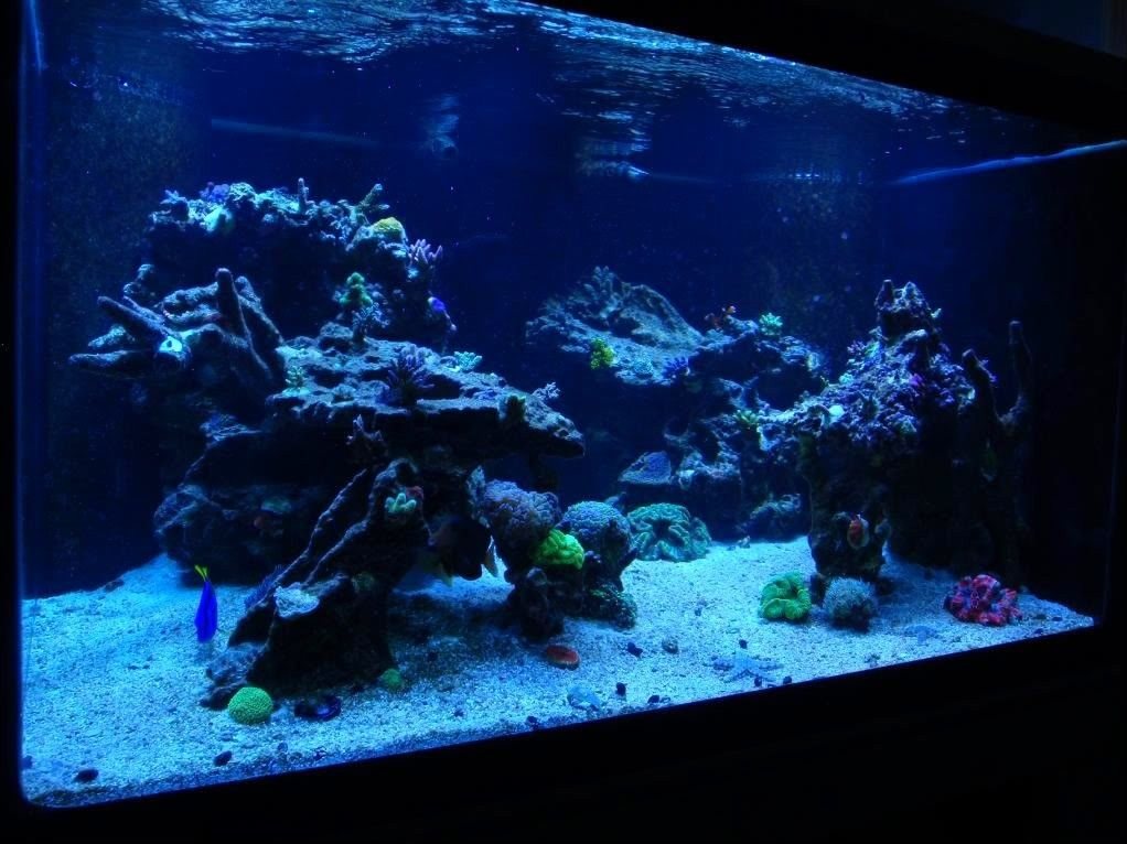 Pin by R&R Aquascapes on Aquascapes | Aquascape, Marine ...