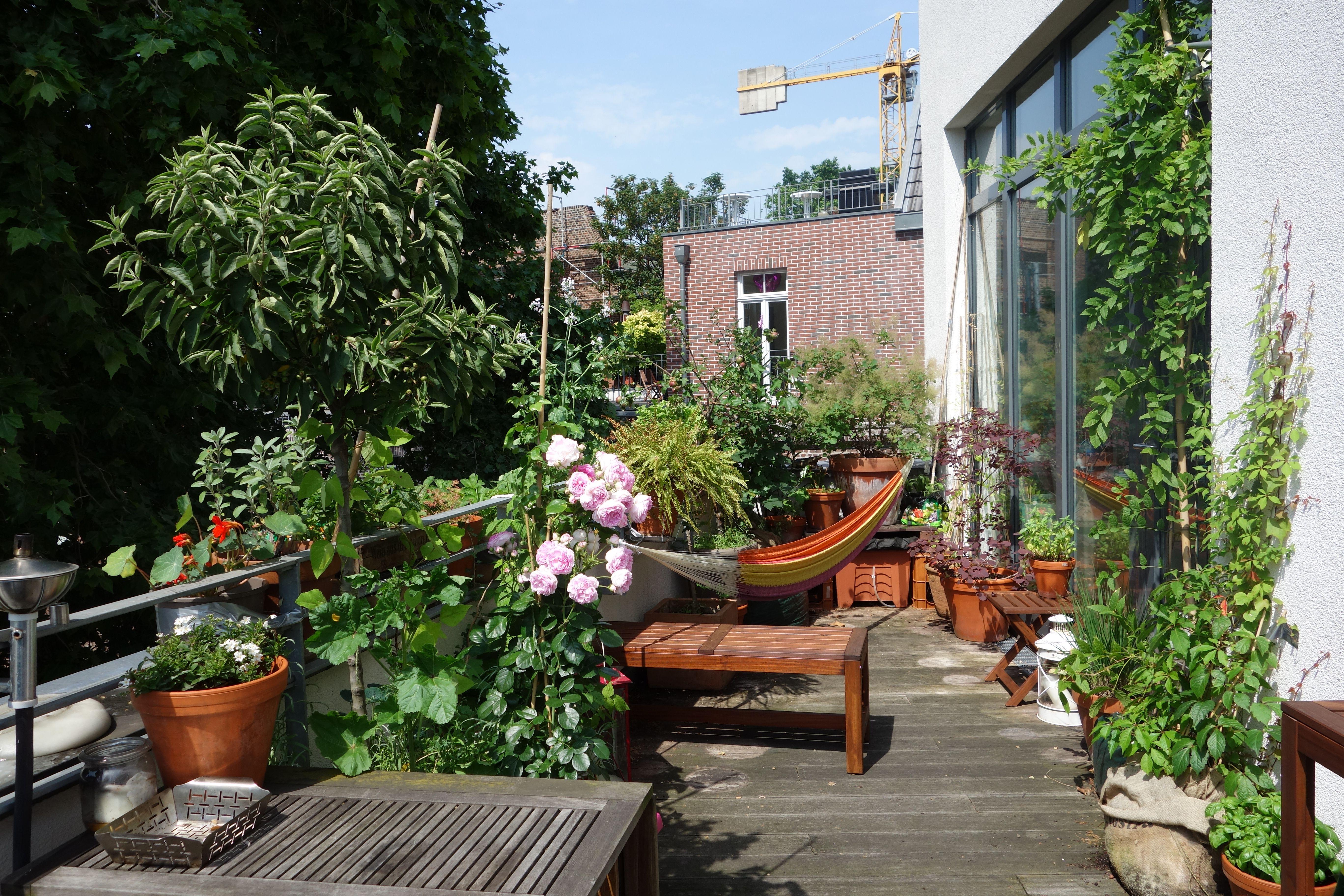 Awesome Indoor Garten Wohlfuhloase Wohnung Begrunen Gallery - New ...