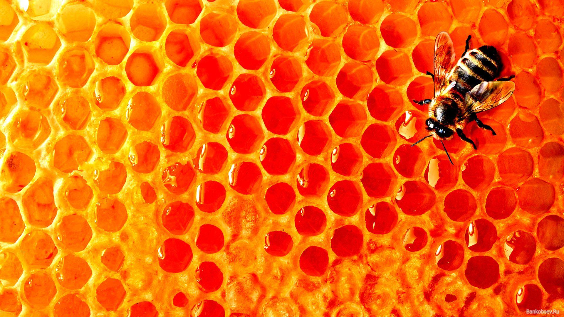 Download wallpaper bee, Honey, honey download