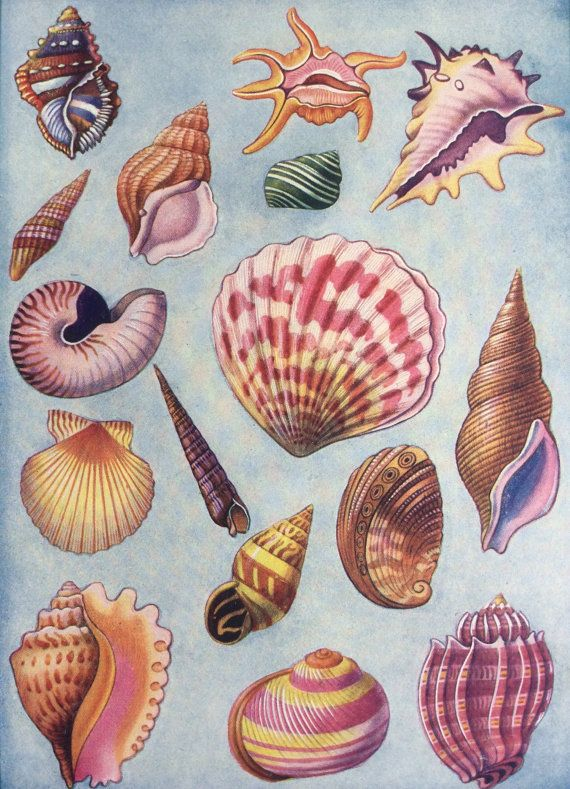 Vintage 1930s SHELLS SEASHELLS Sea Life PRINT HOME DECOR by Thepapermuseum on Etsy