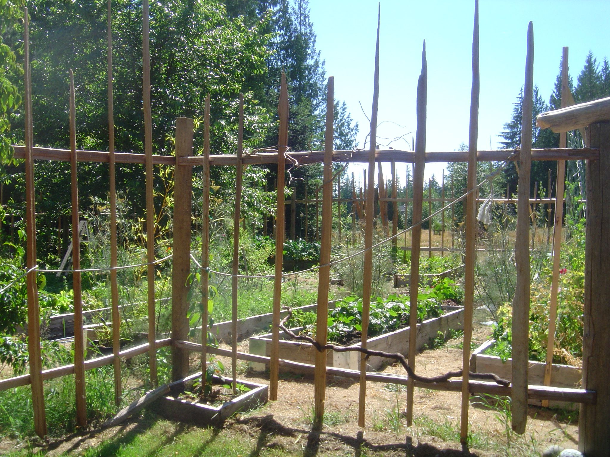 diy garden deer fence and how to build a deer proof funky garden enclosure - Deer Proof Vegetable Garden Ideas