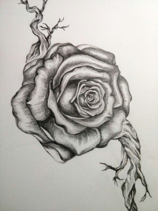 A quick sketch using my mechanical pencil ;) # ...