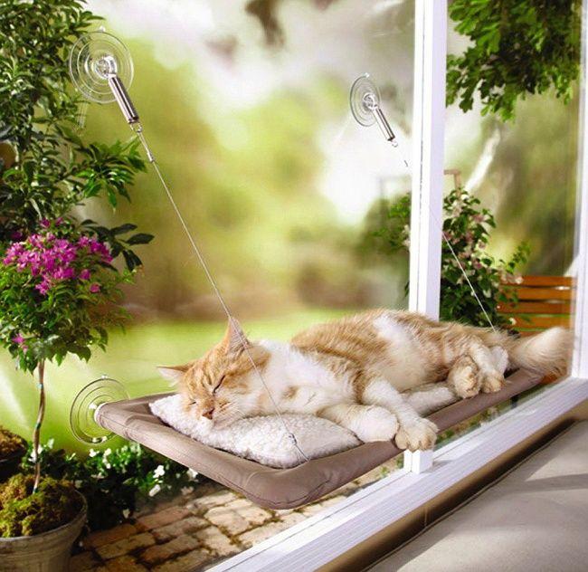 #PetSupplies cat's shelves