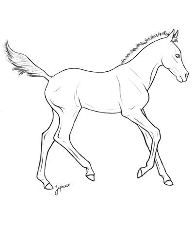 Free Foal Lineart Horse Coloring Pages Horse Coloring Pencil Drawings Of Animals