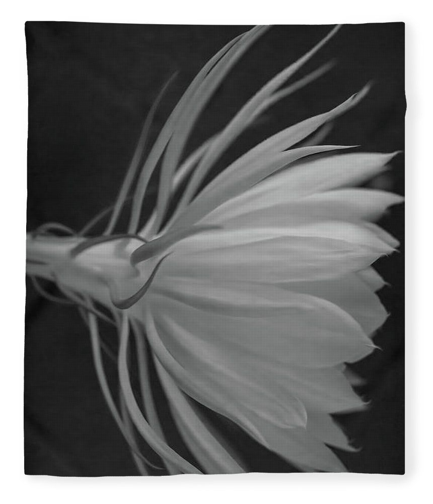 Queen of the night bw fleece blanket for sale by alana thrower queens