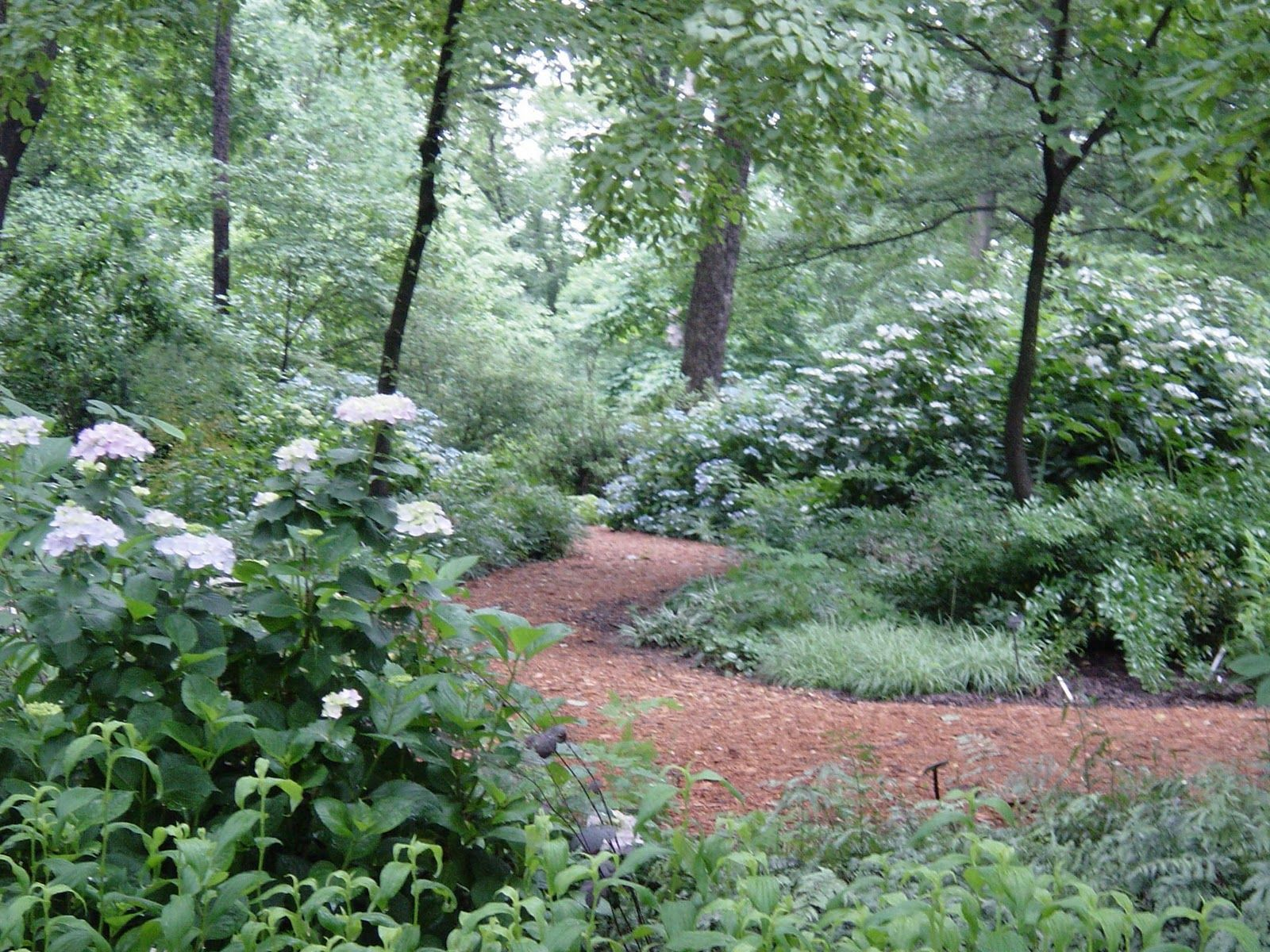 Crabapple LandscapExperts: Summer Flowering Shrubs, Part 3 of 4
