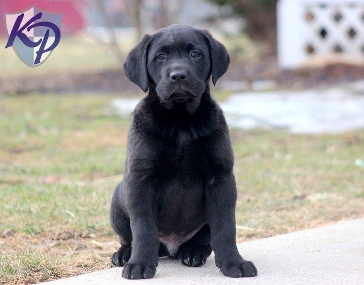 Puppy Finder Find Buy A Dog Today By Using Our Petfinder With
