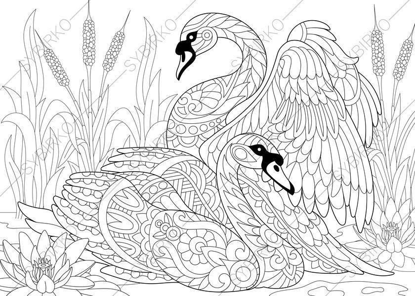 Swan Animal Coloring Book Google Search Free Printable Coloring Pages Free Printable Coloring Animal Coloring Pages