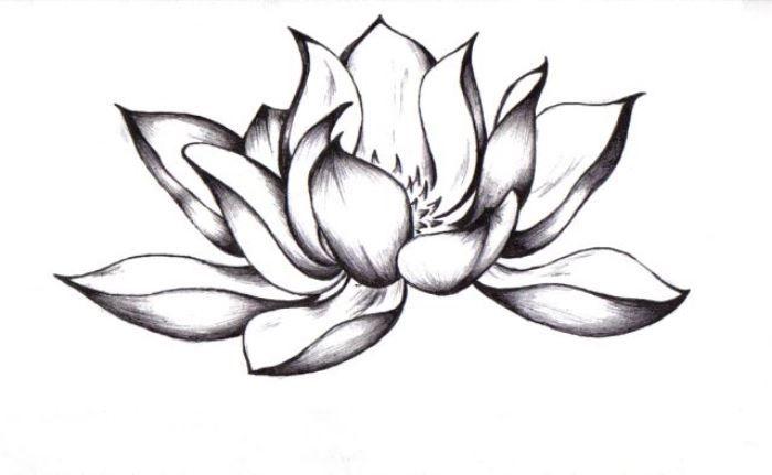 Lotus Tattoo Black And White Sok Pa Google Flower Tattoo Drawings Black Lotus Tattoo Picture Tattoos