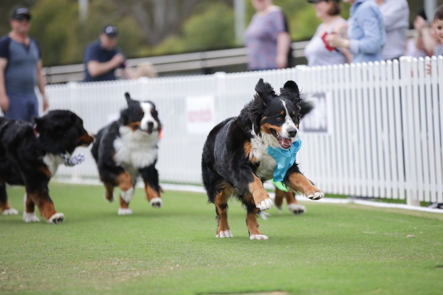 2020 Canine Cup Screening Adelaide March 9 in 2020
