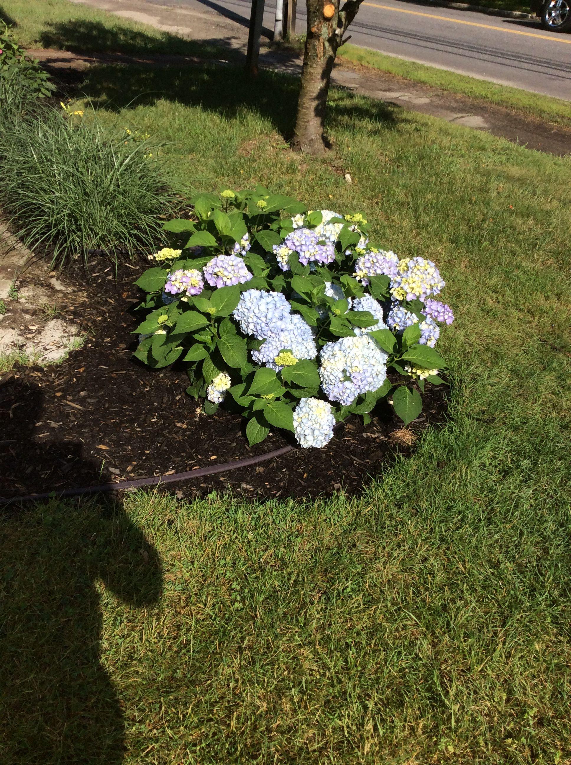Pin by bg on Garden  Garden, Plants, Outdoor decor