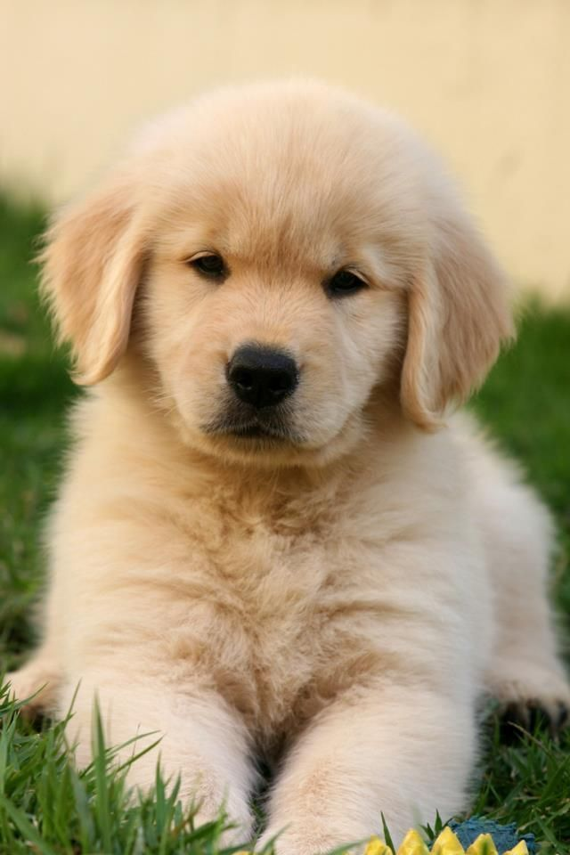 Cutest Dog Breeds in the World #wallpaper