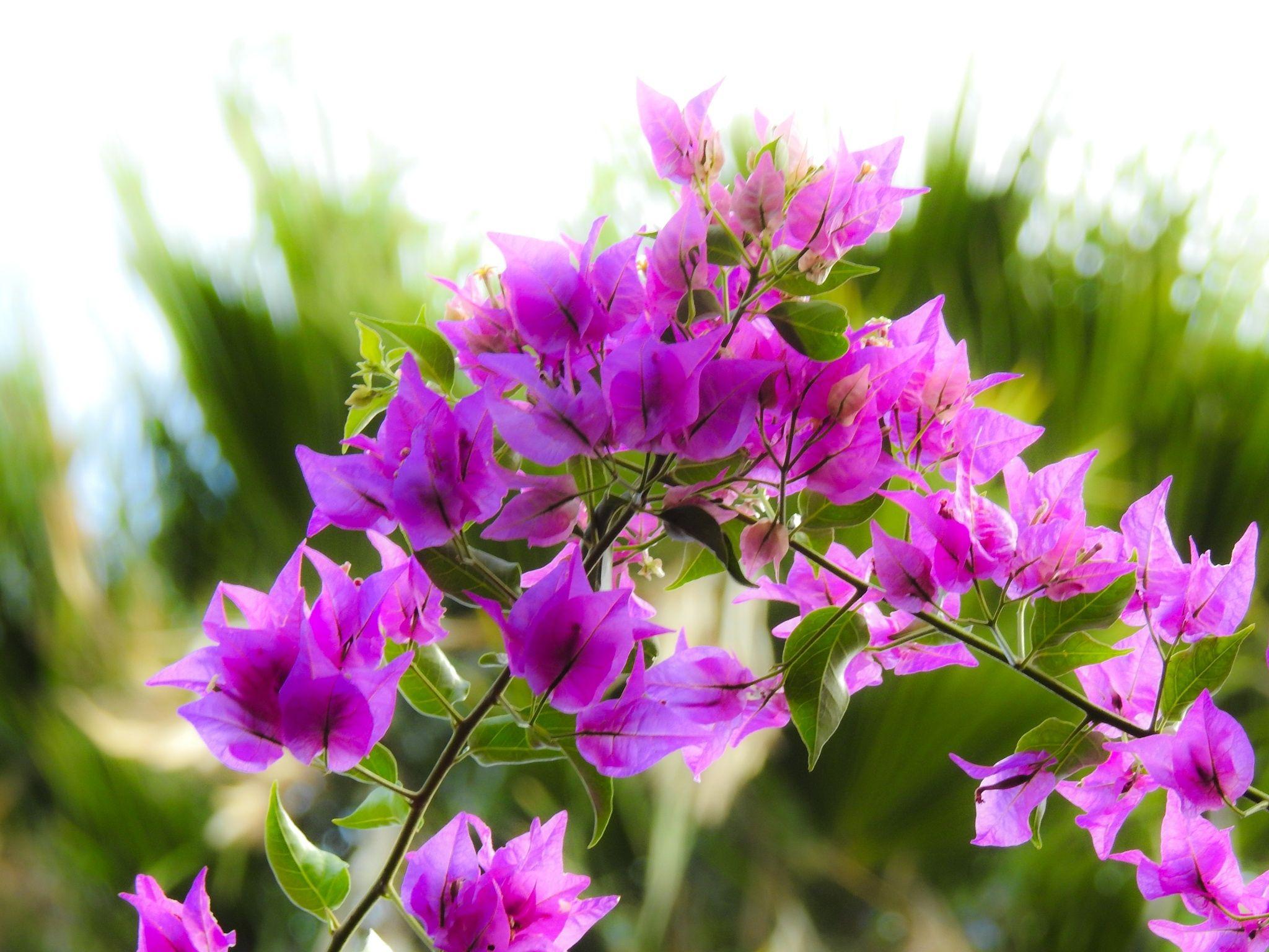 Hawaiian flowers trees 4 exploring oahu away from waikiki i hawaiian flowers trees 4 exploring oahu away from waikiki i discovered flowers izmirmasajfo Images
