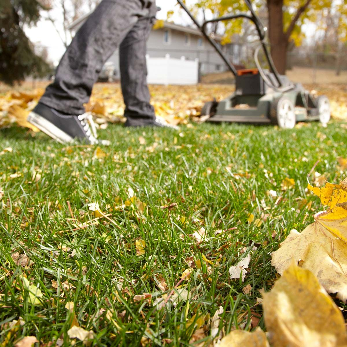 Fall Lawn Care, Weeds In Lawn, Fall