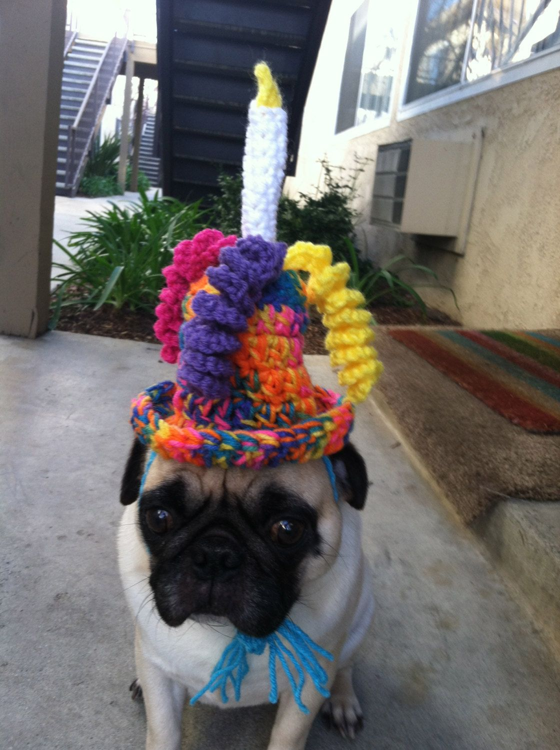 Hats For Pugs Birthday Hat Dog Novelty Cute Dogs Crochet Handmade 1600 Via Etsy