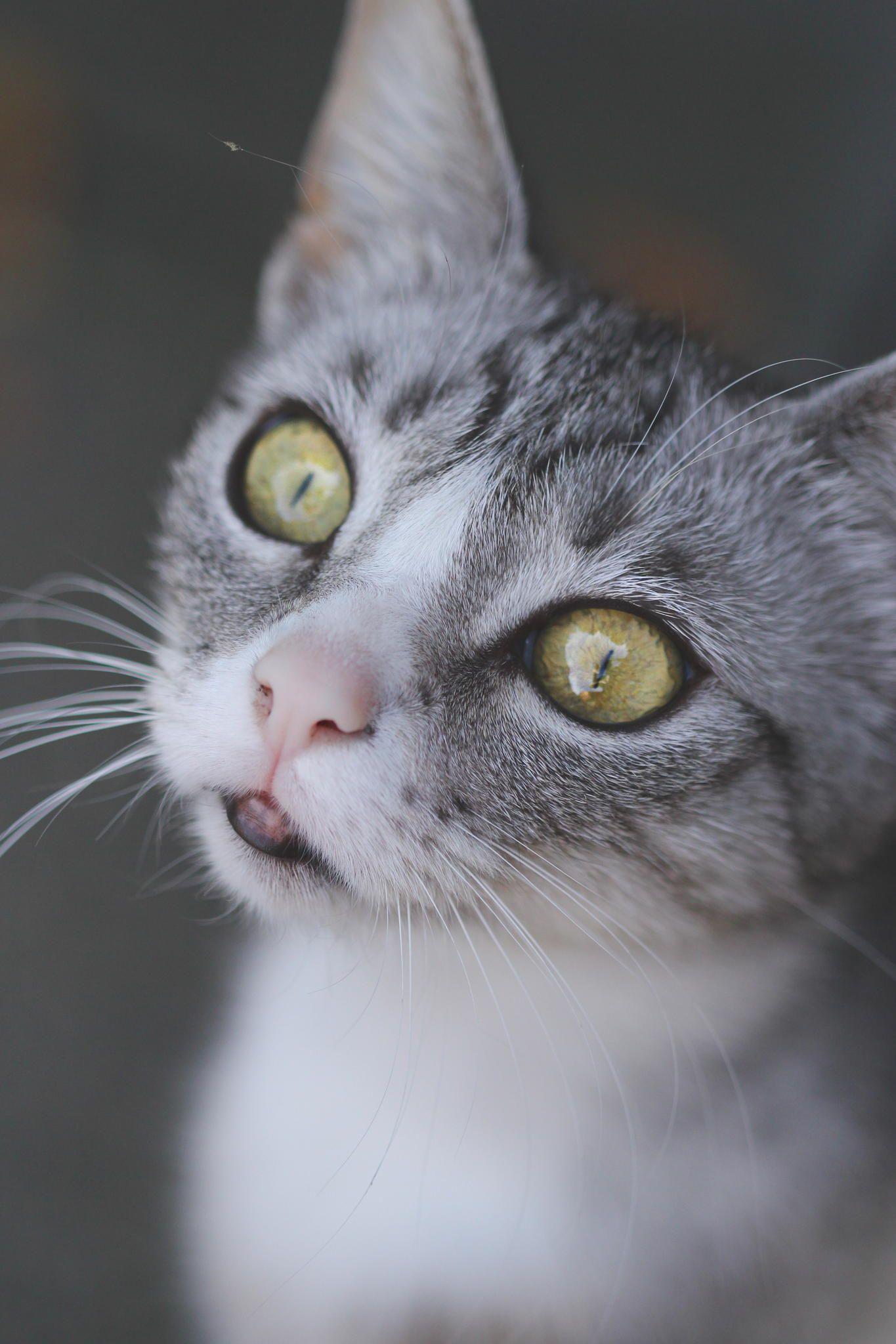 Meow by Steffi Büschgens on 500px Cats, kittens, Cute